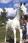 Sandra with white horse